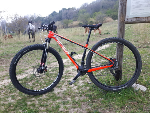 Specialized - Stumpjumper HT Comp Carbon 29
